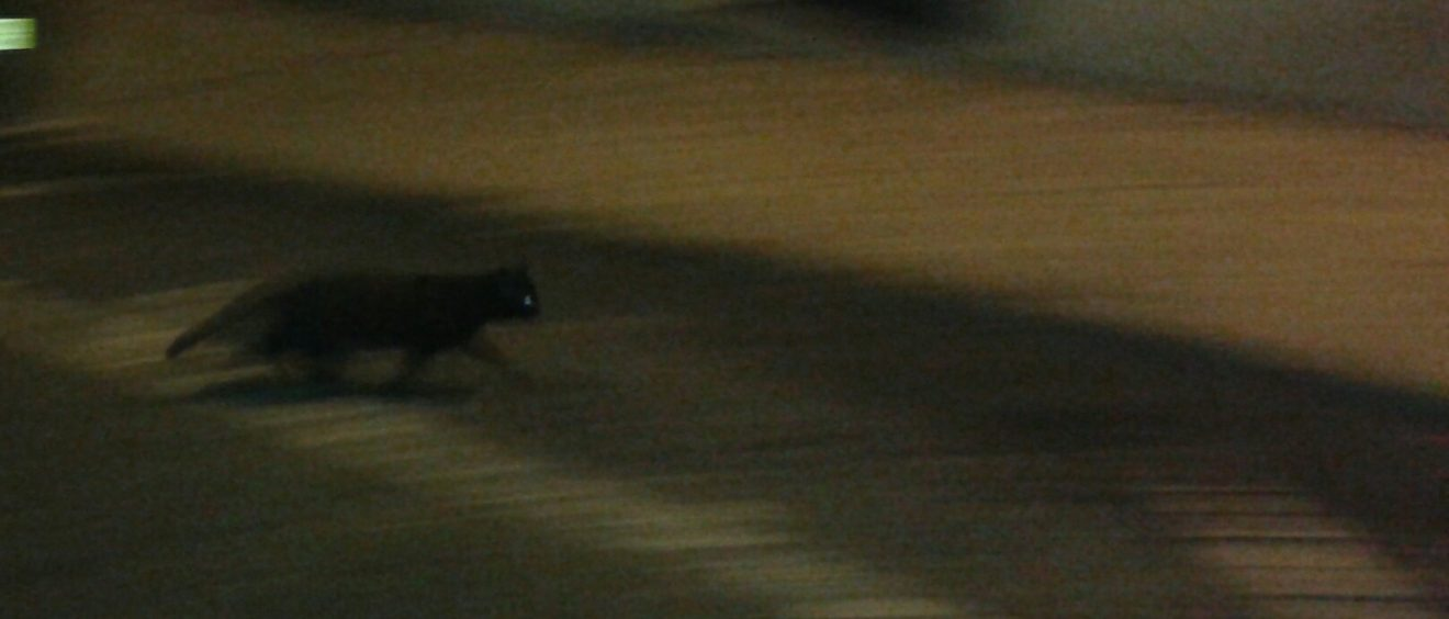 À l'image de ce chat dans l'ombre des rues de Lisbonne, le milieu de la bruxeria se fait discret et opaque. Crédit Alexis Demoment.