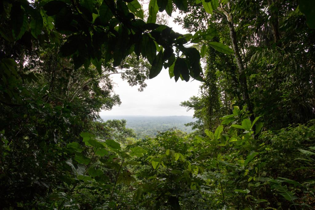 Jungle amazonienne. Crédit Jean-François Renaud.